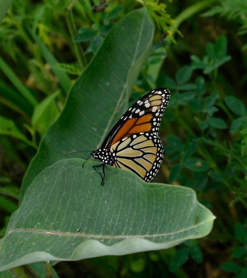 feist-monarch.jpg